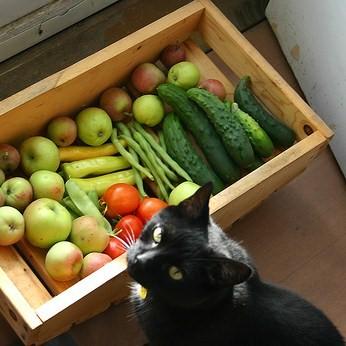 cat_veggies
